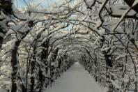 La Charmille sous la neige